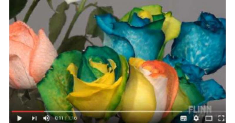 Vikerkaarevärvilised ise värvitud õied