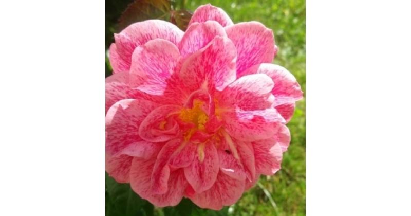 Camelot - meie uus pereliige