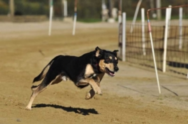Kuidas ennetada koerte rünnakuid ja kuidas käituda, kui koer sind ründab?