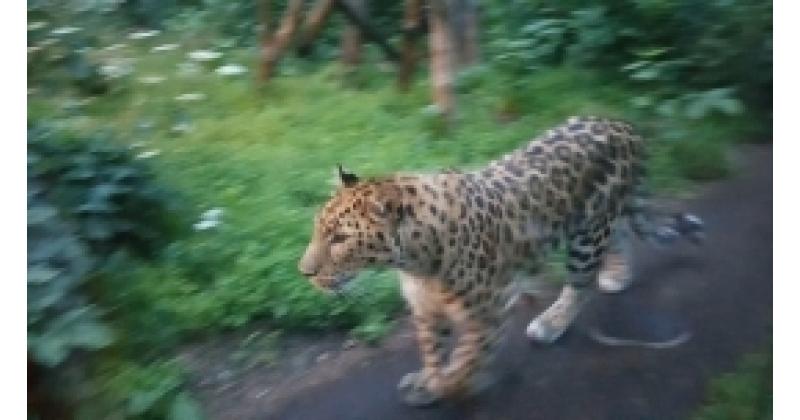 Hilisõhtused ekskursioonid Tallinna loomaaias
